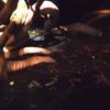 2016/11/25 【きょうのインパク展】ミズアシナシイモリごはんの時間