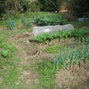 タマネギの苦土石灰撒きと長ネギの土寄せと畑の様子