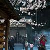 春の鎌倉を撮り歩く-デジタル編-