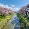 あさひ舟川「春の四重奏」🌸