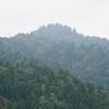 [個人山行]京都百名山シリーズNo.25・26傘峠・ブナノキ峠