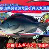 【フカセ釣り】グレがだめならイサギを釣る!! 和歌山県見老津地区【弁天丸渡船】2020年12月1日