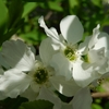 さくらばな のどかににおう 春の野に 蝶もきてまう そでのうえかな