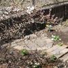 くるみの庭のご紹介