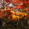 八ヶ岳周辺の星空と紅葉の様子 '17年10月