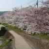 春の京都で、カメラ片手にお花見してきた