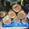 キャンプ場で樹木の整備のお手伝いをして原木を無料で頂いています。