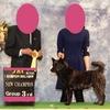 甲斐犬サン、チャンピオン完成するゥッの巻〜ツ、ツイニ:(;゙゚'ω゚'):震エル。