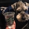 【スタバ】Starbucksに無料メニューなんてあるんすか★