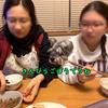 母ちゃんのご飯を横から盗み食いしようとタイミングを見計らっているミニチュアシュナウザー