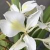 植物たちの様子(ジンジャーリリー、カクテルマム、ジャスミン、ハイビスカス、ガイラルディア、マリーゴールド、シクラメンなどなど)