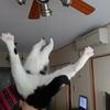 今日の黒猫モモ&白黒猫ナナの画像