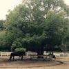 アンデルセン公園では子供が喜ぶ乗馬体験もできる!しかも100円でございます。