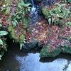 【観光】新潟周辺のおすすめの滝スポット
