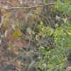 探鳥写真#22【おはるちゃんパパ写真撮影記録 part24】