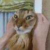 猫アルバム(2020年10月2週目)