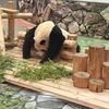 パンダに会える「南紀白浜アドベンチャーワールド」は最高
