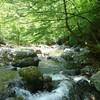 【渓流釣り】奥多摩 小川谷で渓流釣り 今日も撃沈 (`;ω;´)