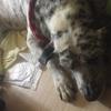 【老犬が歩けなくなる】犬が足を引き摺りはじめたら〜ナックリング〜