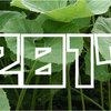【2017年】「蕗(ふき)収穫量」ランキング