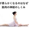 【効果的なストレッチは何秒?】ストレッチすると体が柔らかくなる筋肉の神経のしくみ