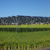 ソーラーシェアリングとは?補助金はいくら?導入事例や作物、問題点など