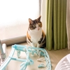 【愛猫日記】毎日アンヌさん#82