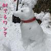 明けましておめでとう!やる事無いから雪遊びだ!\(^o^)/