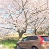 桜がある特別な1週間