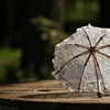 日傘の寿命