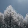 美瑛 冬の光彩