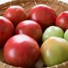 栄養価の高いトマトのおいしさがようやくわかってきた