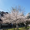 春の訪れ ~新しい道~