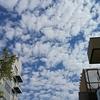 鱗雲 & スタバでパンプキン・フラペチーノ & ビビンバ丼