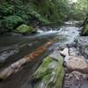 横川の蛇石