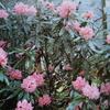5月6日誕生日の花と花言葉歌句