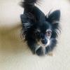 【トレーニングゲーム①】ドッグトレーナーが教える☆愛犬と楽しむ|お名前ゲーム