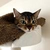 在宅勤務の長期化による猫へのストレス