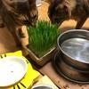 【猫さん暮らし】猫草〜第2章〜