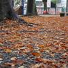 公園の葉っぱなど