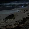 『CANCUN』家族旅行に来たら絶対おすすめ!! 海亀の産卵&孵化。