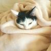猫と一人暮らし 良いところ悪いところ