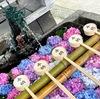 """紫陽花を見に勝運・学問と馬の神社""""藤森神社""""へ行ってきました。"""