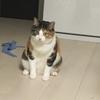 【愛猫日記】毎日アンヌさん#33