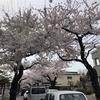 【桜のトンネル】約800mに100本の桜!「桜が丘通りの桜並木」も函館のオススメ桜スポット