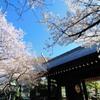 4月 パニック大花見大会のおしらせ