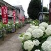 日吉八王子神社にアジサイを見に行ってきました