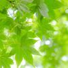 植物の葉の色はなぜ緑色か?