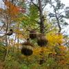 黒石市・黒森山浄仙寺の植物