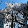 蒼空に映える桜